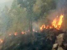 तमिलनाडु के थेनी के जंगलों में लगी आग, 5 ट्रैकरों की मौत, 30 अन्य फंसे