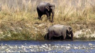 उत्तराखंड: 45 साल के हाथी की कर दी हत्या, चुरा लिए दोनों दांत
