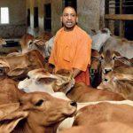 मेरठ-गोरखपुर समेत 12 जेलों में गौशाला बनाएगी योगी सरकार